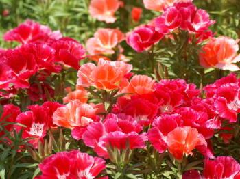 5月23日の誕生花