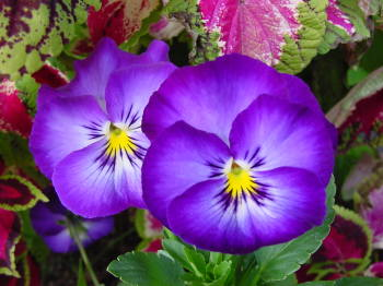 5月25日の誕生花