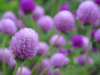 8月30日の誕生花