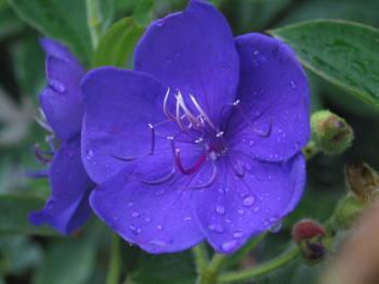 10月8日の誕生花